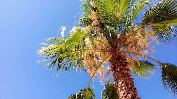 dating tjenester vest palm beach gratis poly dating sites